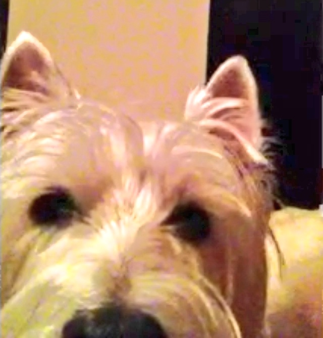 FaceTime with my BFF.