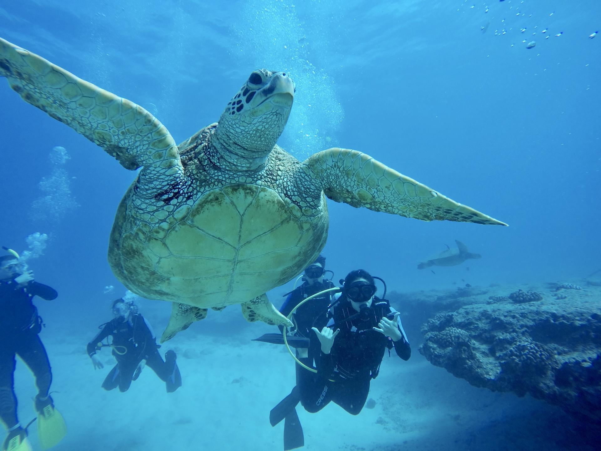 scuba diving with reef pirates