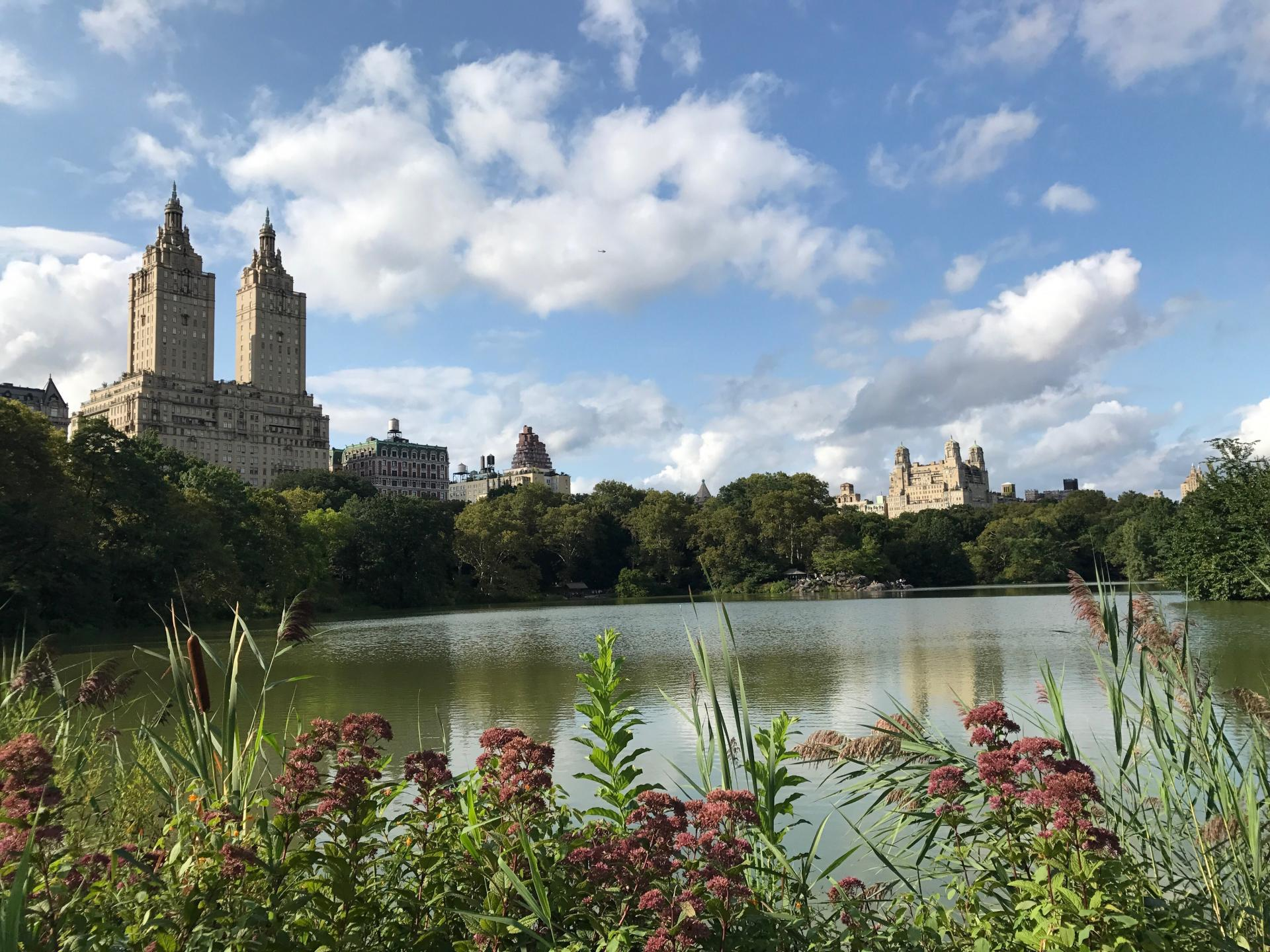 guide to new york city